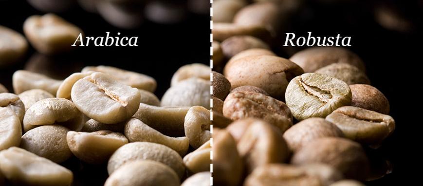 Cà phê Arabica - Robusta hảo hạng