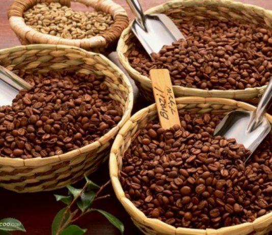 cà phê robusta là gì