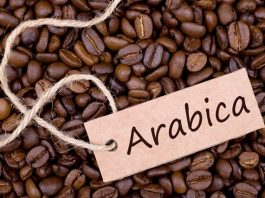 arabica-hao-hang