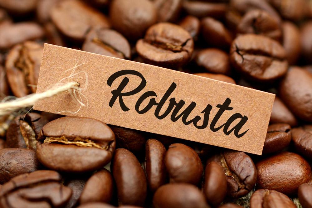 Đặc điểm của cafe robusta 3